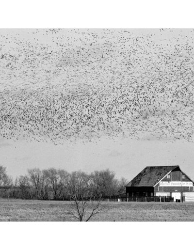 Murmuration, USA tour, 2004